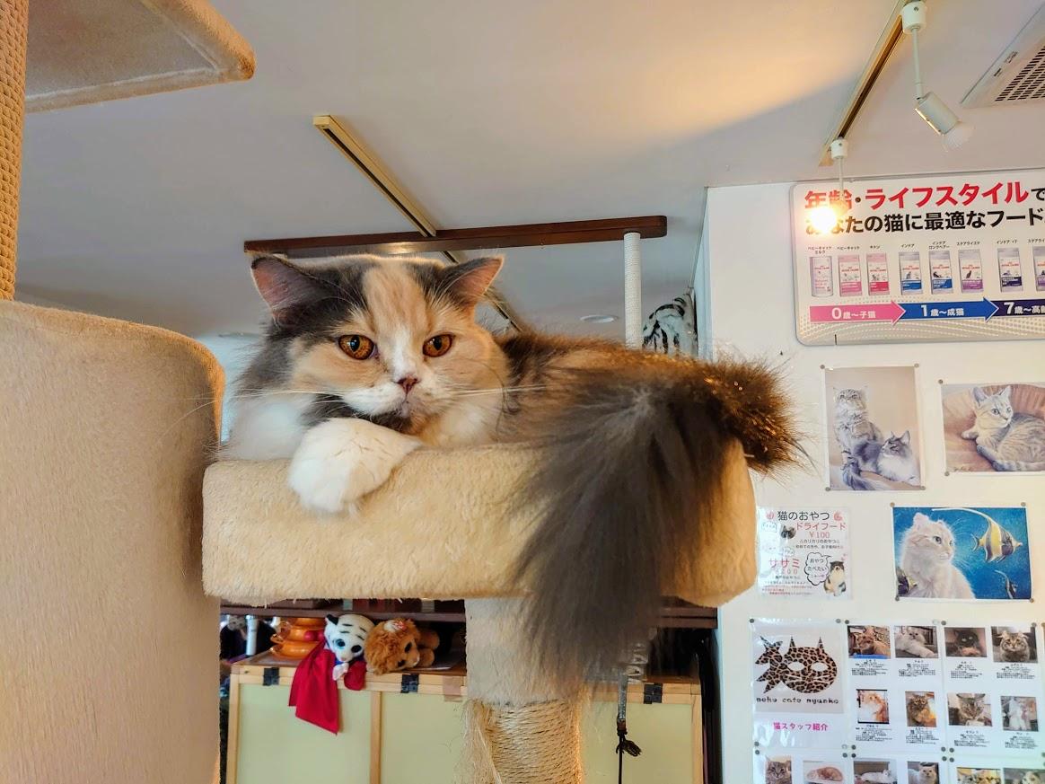 人生初!!「猫カフェ」行ってきました!!③