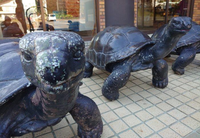 体験型動物園 IZOO(イズー)に行きたかったのはカメさんを観たかったからです。